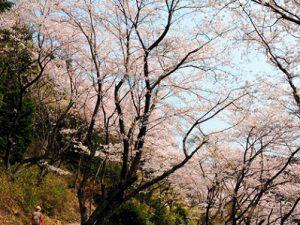 二上山への道